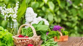 Frisches Gartengemüse in einem Korb