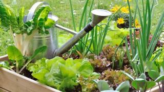 Ein kleines Gemüsebeet in einer Holzkiste