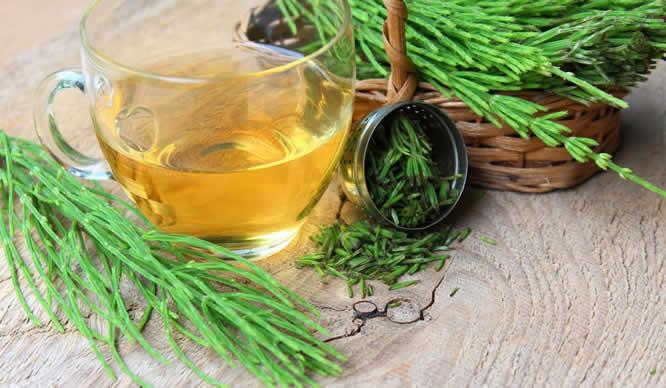 Frisch geschnittenes Zinnkraut und Tee