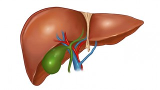 Eine Zeichnung der Pankreas