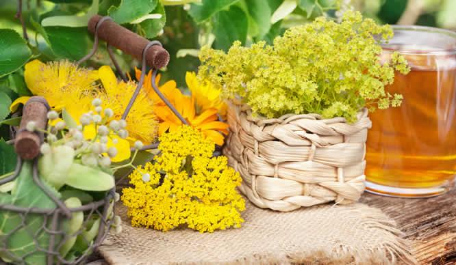 Verschiedene Heilpflanzen im Garten