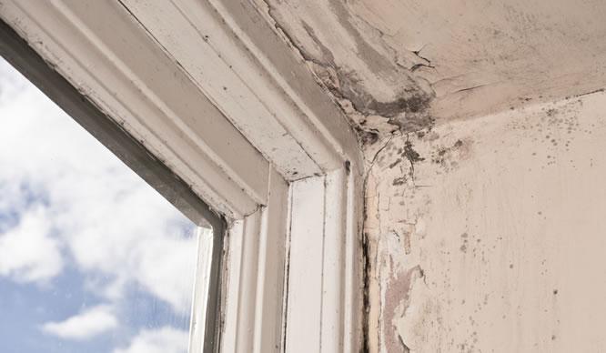 Ein schimmelnder Fensterrahmen