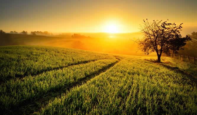 Ein idyllisches Feld im Sonnenuntergang