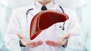 Ein Arzt stellt das Organ Leber vor