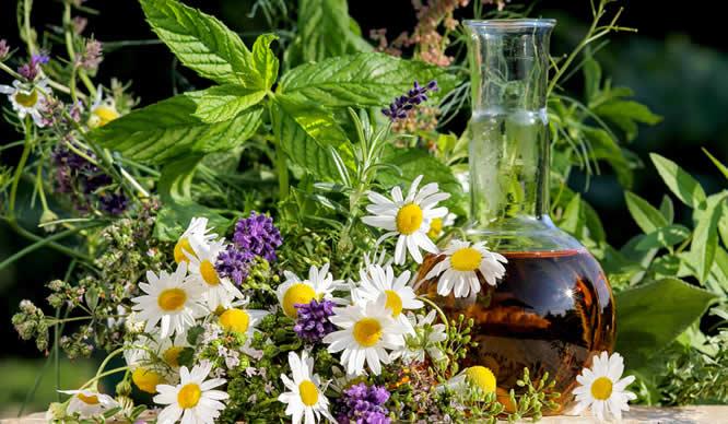 Verschiedene Heilpflanzen und eine daraus gewonnene Tinktur